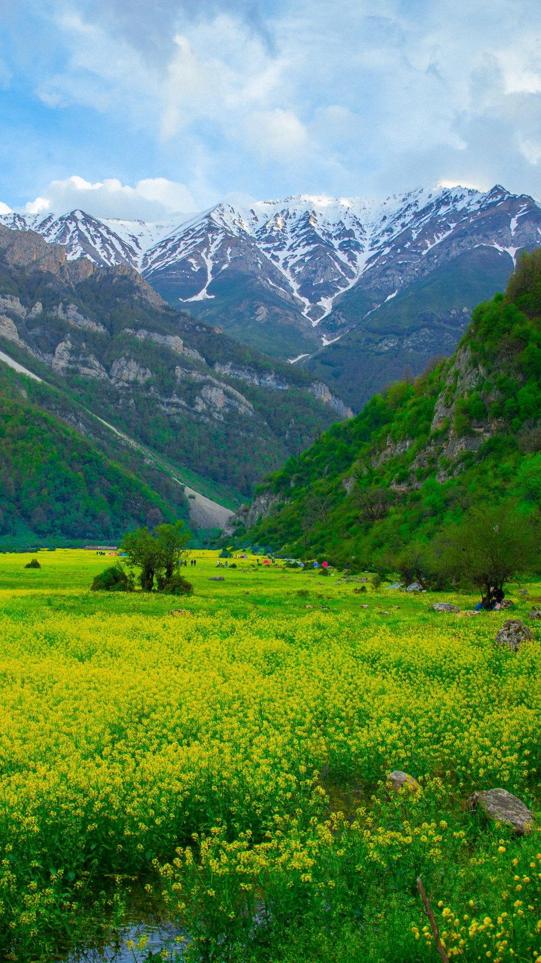 Meadow Mountains Flowers Wallpaper