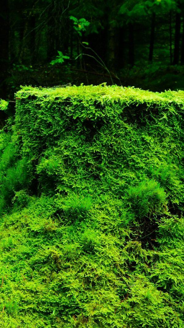 Moss Grass Tree Stump Wood Wallpaper 1080x1920 600x1067 - Moss Grass Tree Stump Wood Wallpaper - [1080x1920]