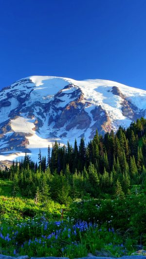 Mount Rainier Usa Mountains Snow Trees Wallpaper 1080x1920 300x533 - Nature Wallpapers