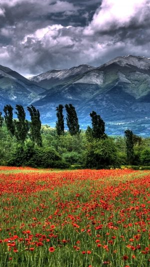 Mountain Field Poppies Landscape Wallpaper 1080x1920 300x533 - Nature Wallpapers