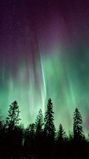 Northern Lights Sky Night Stars Trees Wallpaper 1080x1920 300x533 - Nature Wallpapers