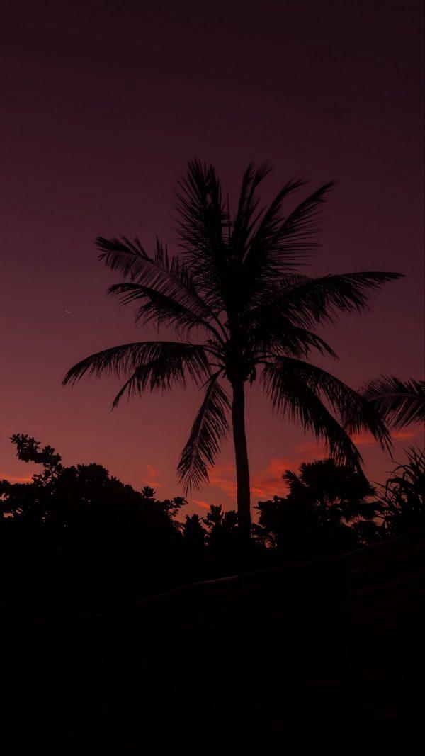 Palm Tree Night Sky Branches Wallpaper 1080x1920 600x1067 - Palm Tree Night Sky Branches Wallpaper - [1080x1920]