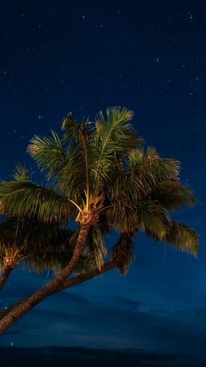 Palms Night Starry Sky Wallpaper 1080x1920 300x533 - Nature Wallpapers
