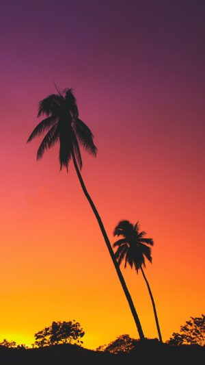 Palms Sunset Silhouettes Wallpaper 1080x1920 300x533 - Nature Wallpapers