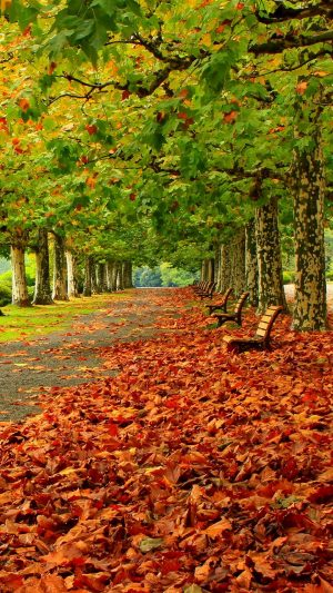 Park Autumn Foliage Benches Trees Wallpaper 1080x1920 300x533 - Nature Wallpapers