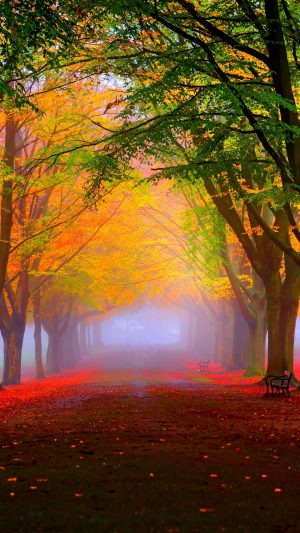Park Fall Fog Foliage Trees Colorful Wallpaper 1080x1920 300x533 - Nature Wallpapers