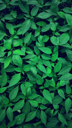 Plant Leaves Green Wallpaper 1080x1920 300x533 - Nature Wallpapers