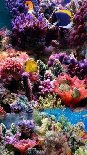 Reef Coral Fish Aqurium Wallpaper 1080x1920 300x533 - Nature Wallpapers