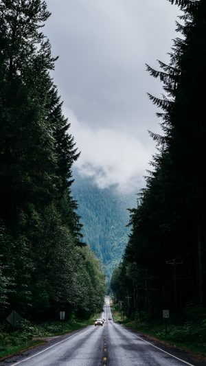 Road Trees Marking Wallpaper 1080x1920 300x533 - Nature Wallpapers