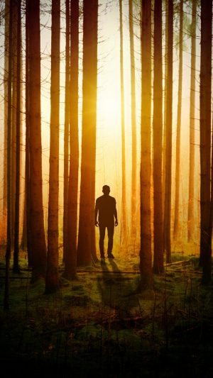 Silhouette Man Forest Trees Wallpaper 1080x1920 300x533 - Nature Wallpapers