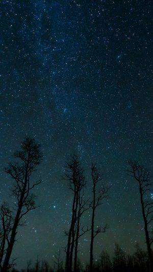 Starry Sky Trees Stars Night Wallpaper 1080x1920 300x533 - Nature Wallpapers