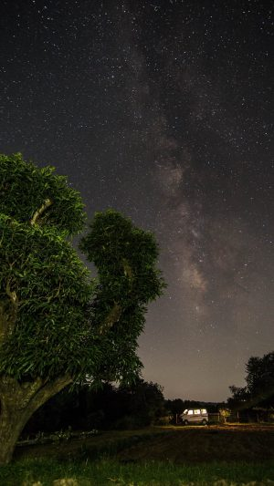 Starry Sky Trees Stars Wallpaper 1080x1920 300x533 - Nature Wallpapers