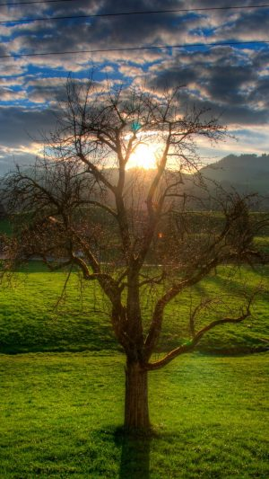 Sunset Field Stream Landscape Wallpaper 1080x1920 300x533 - Nature Wallpapers