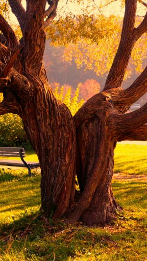 Tree Halves Textures Bench Wallpaper 1080x1920 300x533 - Nature Wallpapers