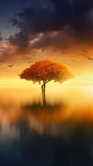 Tree Horizon Sunset Wallpaper 1080x1920 300x533 - Nature Wallpapers