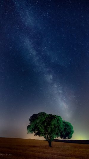 Tree Starry Sky Field Wallpaper 1080x1920 300x533 - Nature Wallpapers