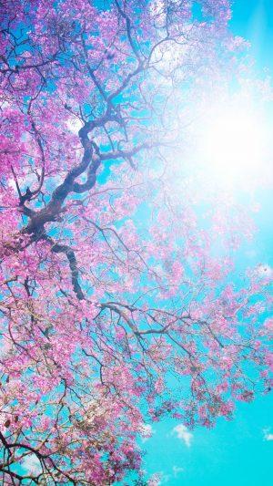 Tree Sun Blue Lilac Krone Spring Flowering Wallpaper 1080x1920 300x533 - White Wallpapers