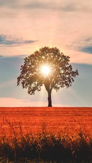 Tree Sunlight Horizon Wallpaper 1080x1920 300x533 - Nature Wallpapers