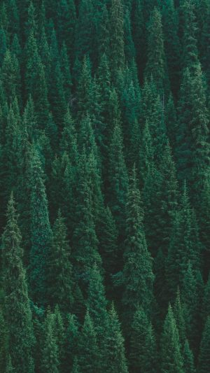 Trees Forest Green Wallpaper 1080x1920 300x533 - Nature Wallpapers