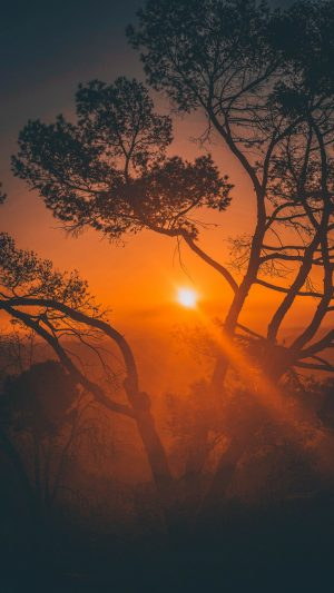 Trees Sunset Branches Wallpaper 1080x1920 300x533 - Nature Wallpapers