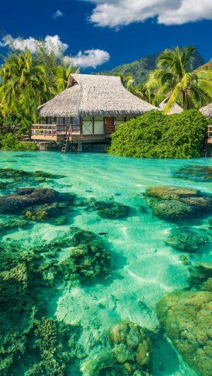 Tropics Palm Trees Ocean Vacation Shore Wallpaper 1080x1920 300x533 - Nature Wallpapers